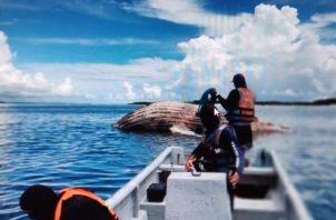 Se procedió a realizar el traslado de la ballena muerta a una zona costera con pocos visitantes. Foto: Cortesía MiAmbiente