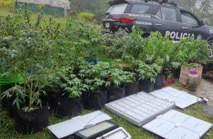 A lo largo de este año es la primera vez, que las autoridades ubican un invernadero para el cultivo de marihuana. Foto: Eric Montenegro