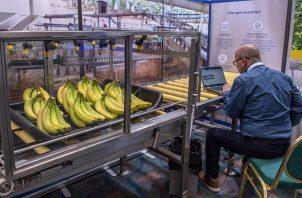 Según las autoridades costarricenses, entre los productos que se están viendo afectados se encuentran la fresa, la piña, el banano, los lácteos, la carne y los embutidos de bovino, cerdo y aves. Foto: EFE