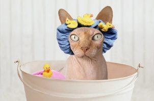 Los gatos sí necesitan una rutina de aseo. Foto: Ilustrativa / Pixabay