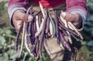 Durante la pandemia, la producción de alimentos en la región ha sido resiliente. Ilustrativa / Pexels