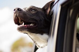 El principal órgano de defensa en humanos, perros y gatos es el sistema digestivo. Foto: Ilustrativa / Pixabay