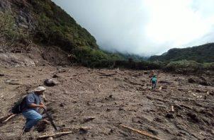 Los senderos de Los Quetzales y Panamá Verde, están ubicados en Parques Nacionales en la provincia de Chiriquí y el mayor número de visitantes son extranjeros. Foto: José Vásquez