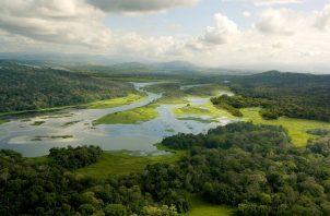El experimento tiene como objetivo central definir las mejores formas de manejar las tierras en el trópico para proteger los recursos hídricos. Foto: STRI