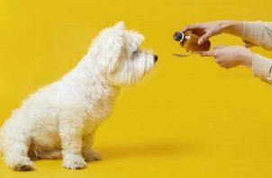 Por mucho que los dueños deseen ayudar a su mascota lo corrector es acudir con un profesional. Foto: Ilustrativa / Feepik