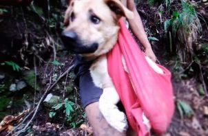 'Tobi' permanecía atrapado en un área rocosa en las montañas del cerro Los Cabezos. Foto: José Vásquez