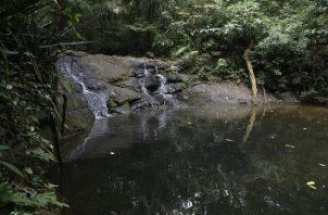 El sendero de El Charco está ubicado en el Parque Nacional Soberanía, una de las  áreas protegidas en la que trabaja la Fundación Natura. Foto: Cortesía MiAmbiente
