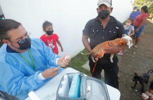 Panamá lanza la campaña #yo amo mi mascota. Foto: EFE