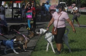 Realizan jornada de vacunación de contra la rabia y orientación alimenticia para mascotas. Foto: EFE