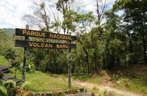 El Parque Volcán Barú es una área protegida, ubicada en la provincia de Chiriquí. Foto: Cortesía