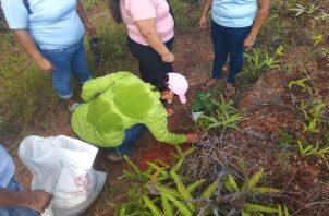 Para dar inicio a este proyecto ambiental se entregaron dos mil bolsas negras, una yarda de tierra negra, además de abonos y cascarilla de arroz, entre otros insumos. Foto: Thays Domínguez