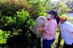 Los técnicos del Mida visitaron al menos 120 localidades en toda la región herrerana, para realizar encuestas fitosanitarias. Foto: Thays Domínguez