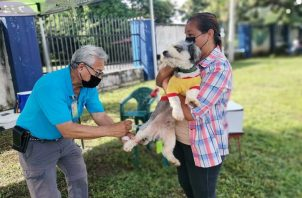 Minsa buscan orientar y concienciar sobre la importancia en la atención de las mascotas. Foto: Cortesía Minsa