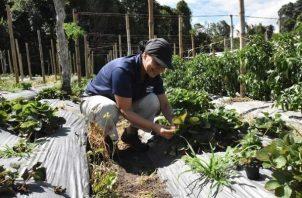 Los trabajos deben promover la restauración y mejora los suelos garantizando seguridad alimentaria. Foto: Cortesía