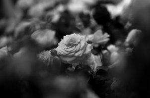 La regla universal de que solo se cosecha lo que se ha sembrado se aplica en forma ineludible y misteriosa.  Foto: EFE.